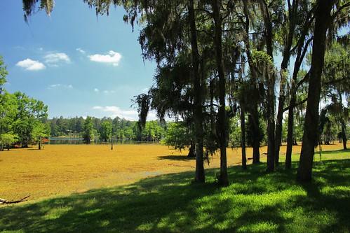 lake louisiana bayou cypress doyline lakebistineau invasivevegetation