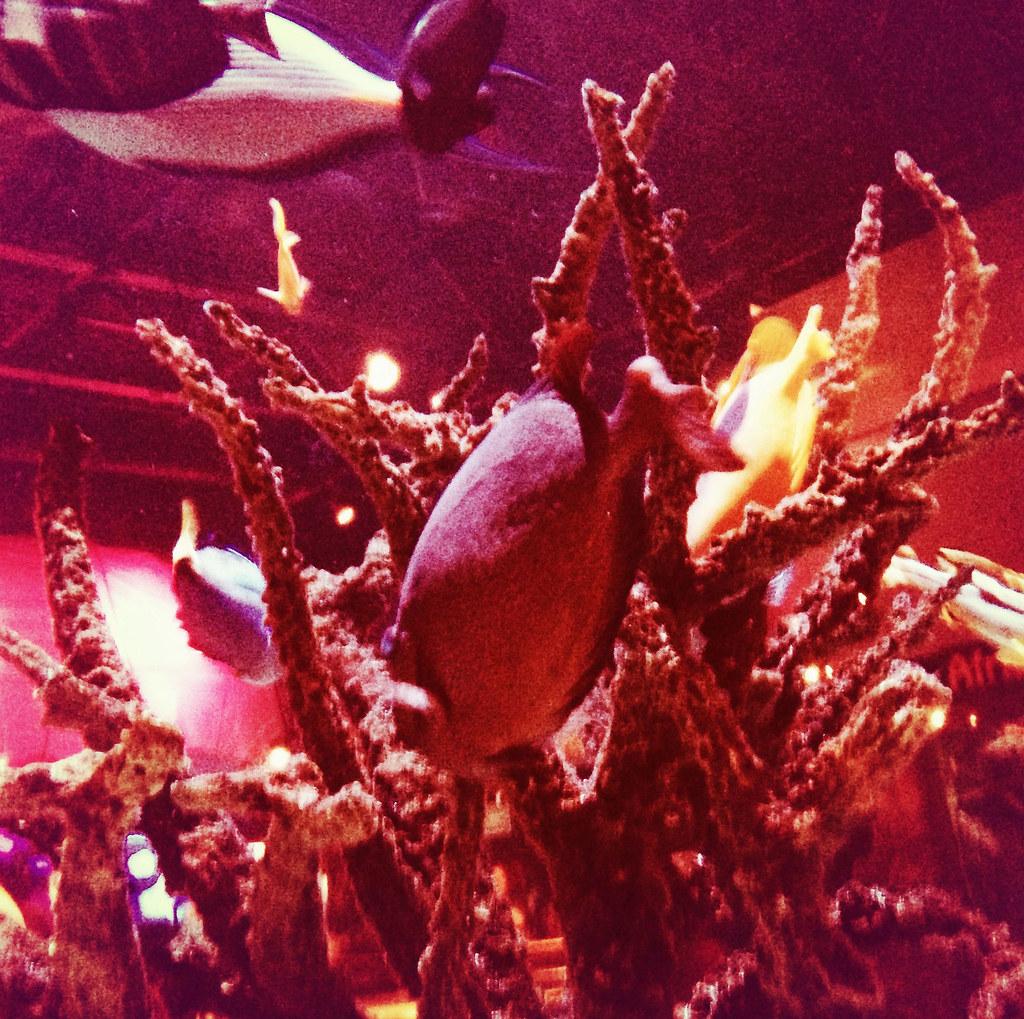 at Mystic Aquarium...