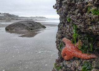 Low Tide in Lincoln City (Oregon) | by Ingrid Valda Taylar