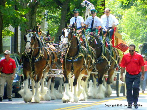 budweiserclydesdales budweiser clydesdale horse carriage wagon advertising cheval caballo pferd cavallo collegehill lafayettecollege collegeavenue eastonpa northamptoncounty pa pennsylvania lehighvalley visit 2013 city mayorsalpanto budweiserteam salpanto equine livestock farm pet