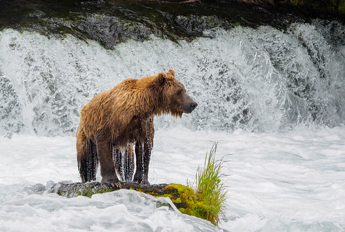Posing by the falls | by Ned Awty