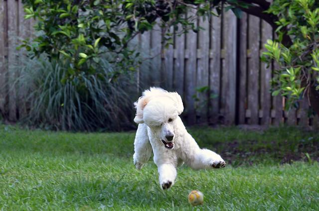 Aurey's Fast Ball 19-52wfd