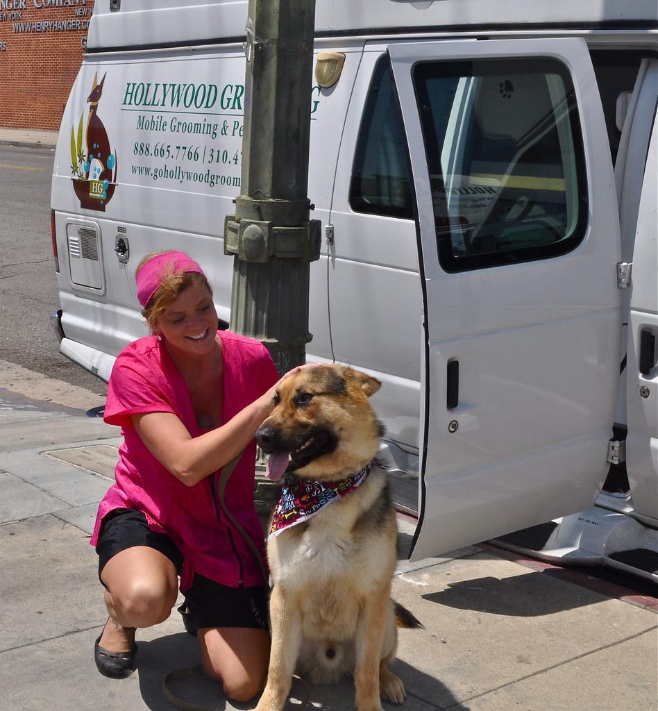 Westside German Shepherd Rescue In Los Angeles One More C Flickr