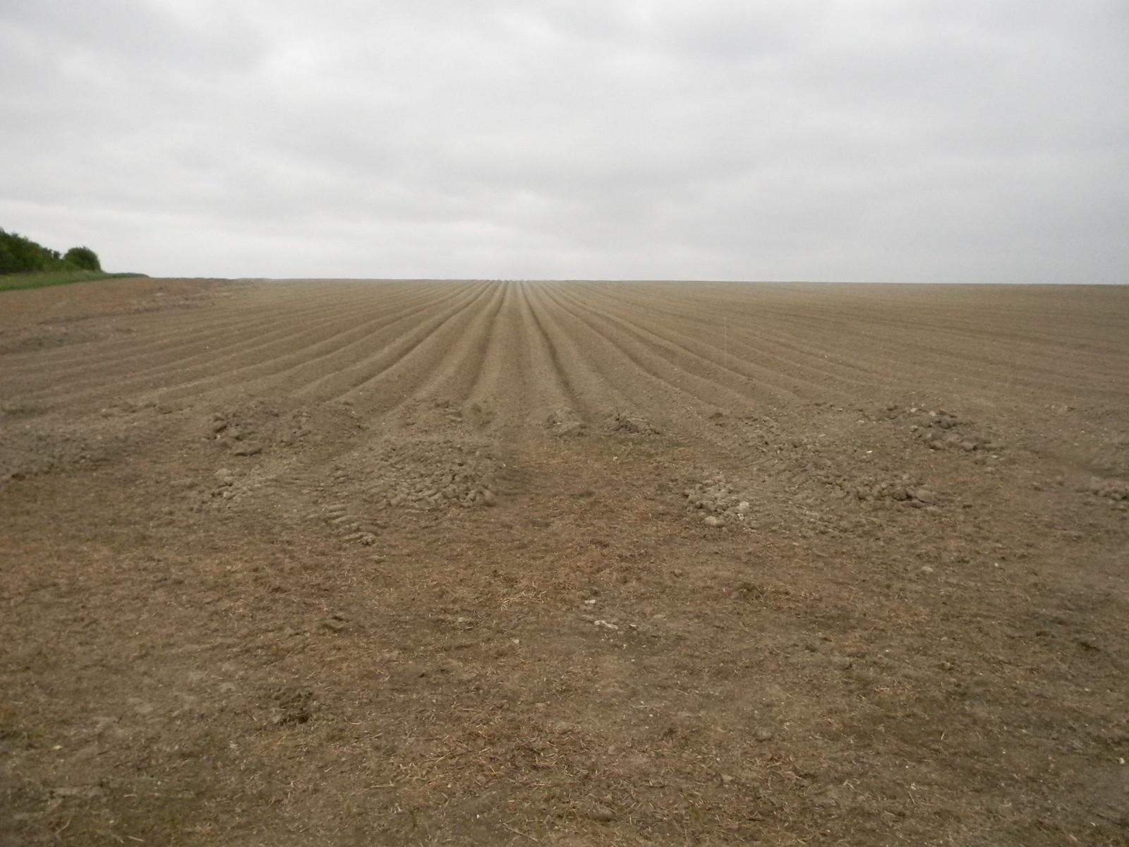Big ploughed field Baldock Circular