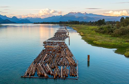wood travel mountain canada mountains tree industry nature water beautiful vancouver forest port work river landscape log industrial natural outdoor forestry timber britishcolumbia scenic logs logging environmental columbia national pile trunk environment british softwood float riverbank trade lumber loading stockpile harvesting deforestation piled mountainous pittmeadows lumberindustry pittriverbridge