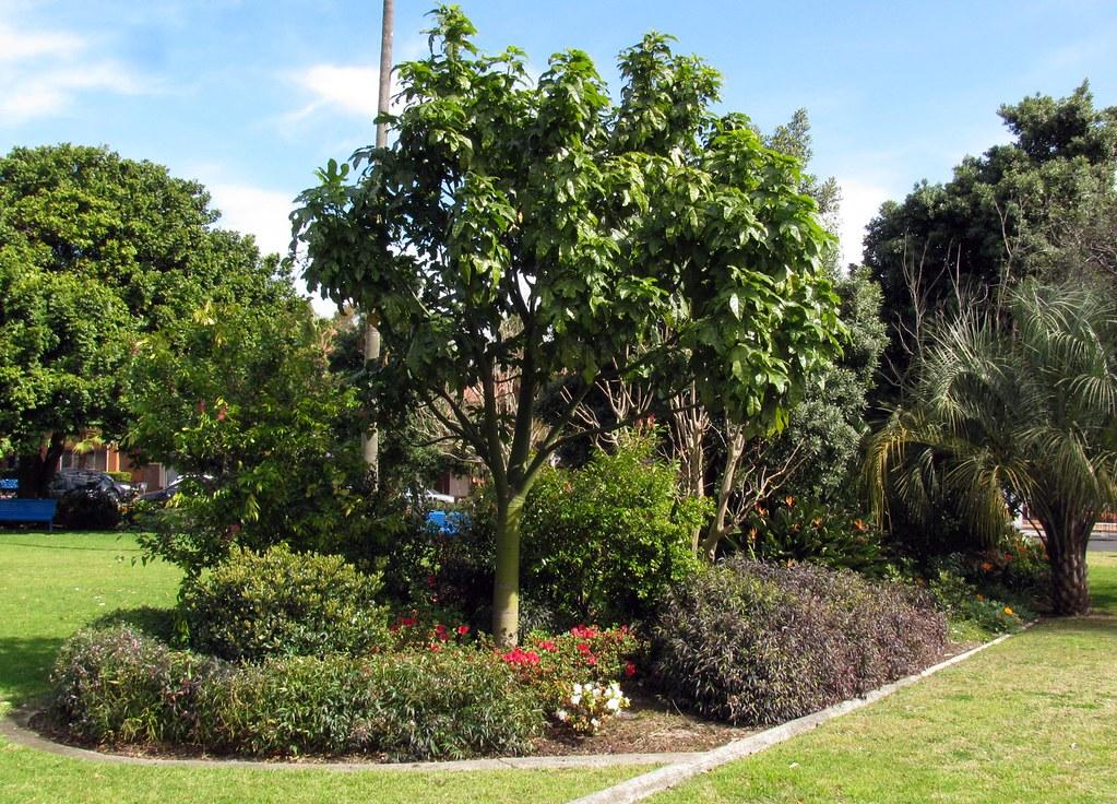 Park, Daceyville, Sydney, NSW.