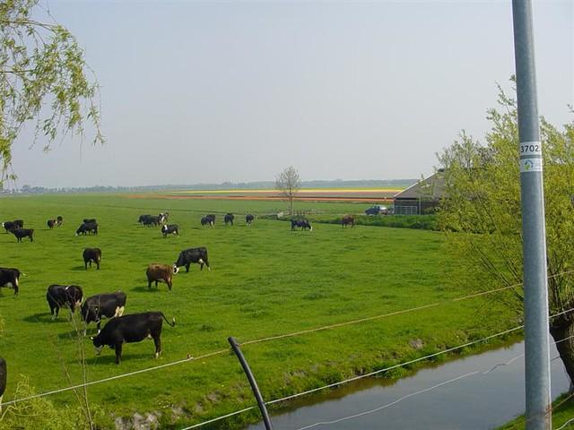 Hoorn          07-05-2006 30Km  (8)
