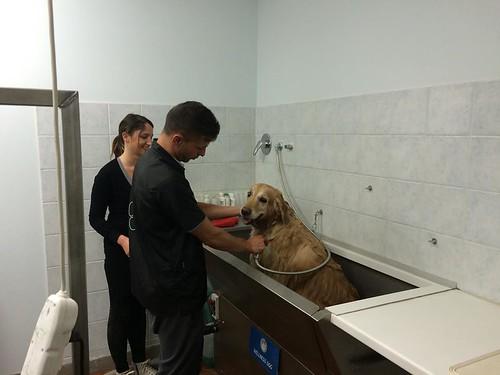 Frida   by wellnessdog
