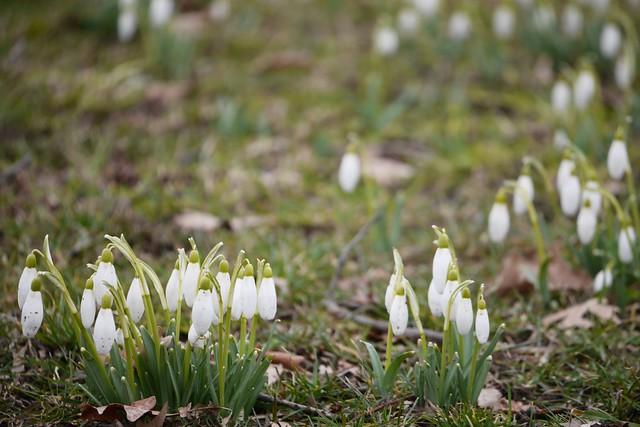 土, 2015-03-28 11:36 - Brooklyn Botanic Garden