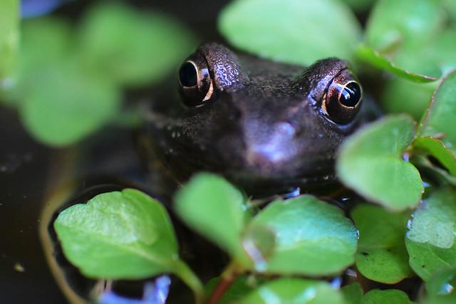 Frog 1 20120506