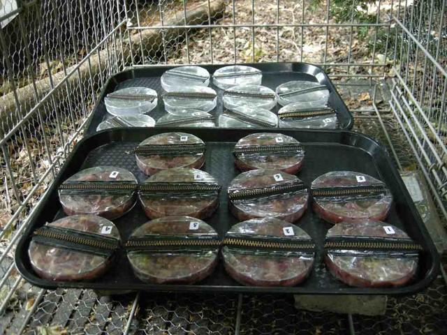 Wildlife garden set up experiment