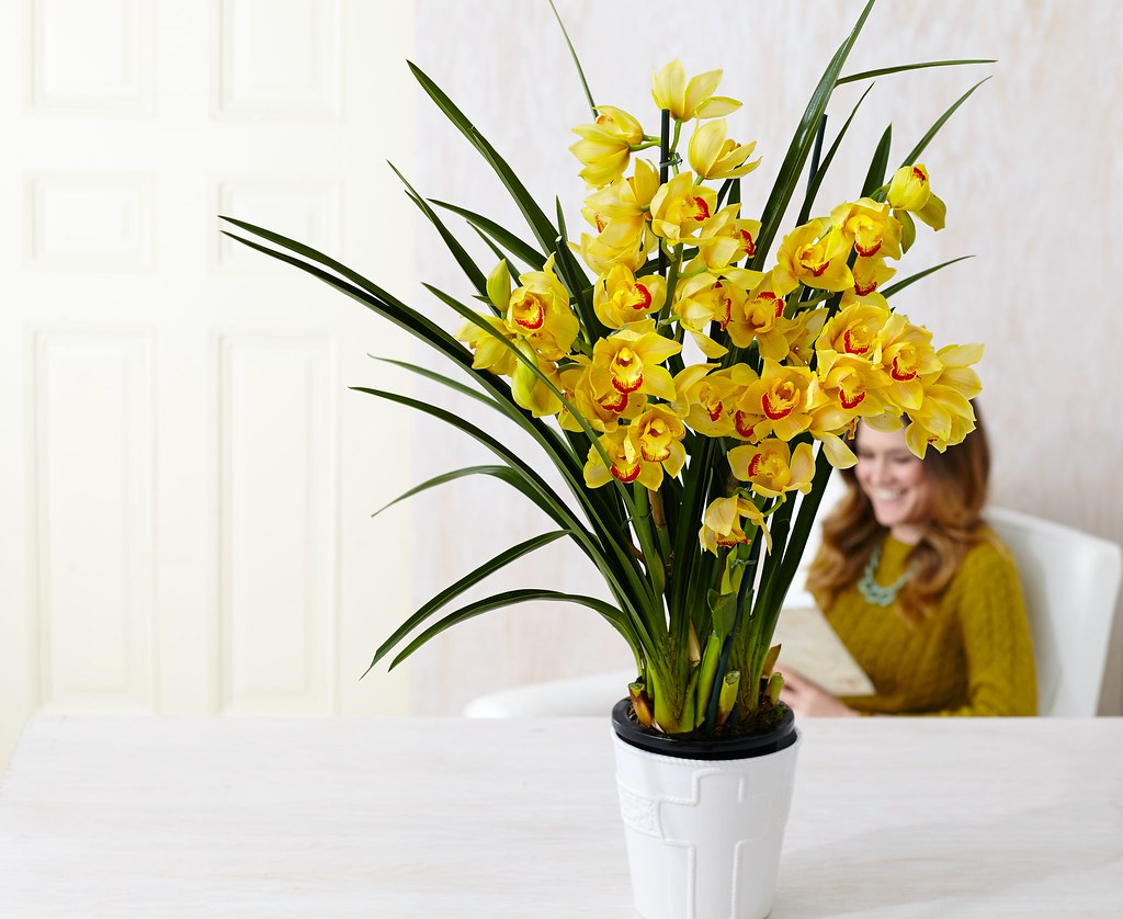 potted orchid with a woman wearing mustard yellow sweater in the background seated on a chair reading