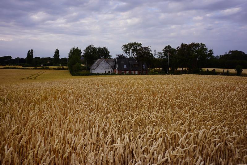 Kaedeby-Haver-juli-2015 (9)