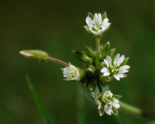 Garden Flower 1 20120502