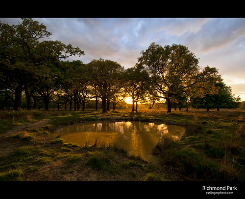 road park greatbritain trees sunset england sky london wet water grass clouds landscape photography eos photo pond europe shot britain royal richmond single 5d cityoflondon intersting mkii esslinger esslingerphotocom esslingerphoto