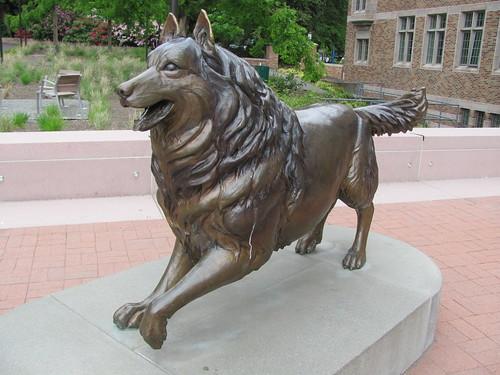 Husky Statue - UW | by javacolleen