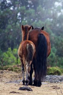 Nai e fillo na serra da Groba | by ateneo fotográfico