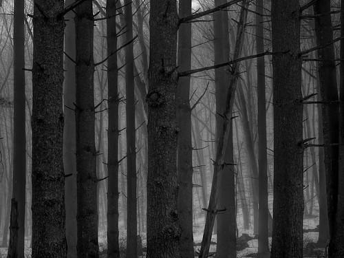 fog snow mist trees edwaste edsteinerts landscape environment landscapes connecticut ct newengland