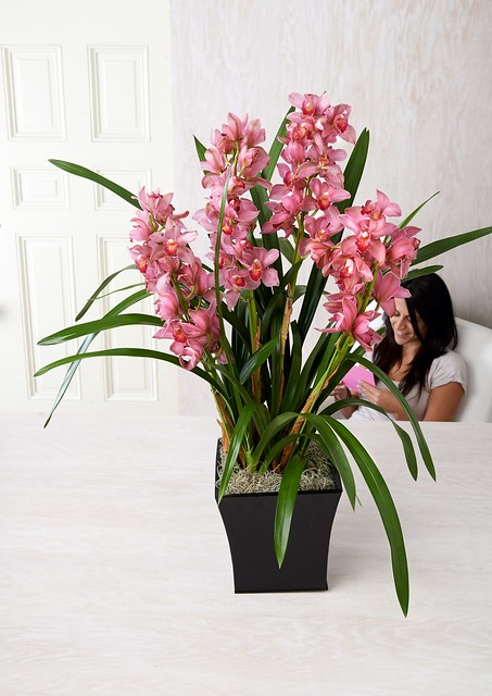 potted orchid with a woman in the background seated on a chair reading