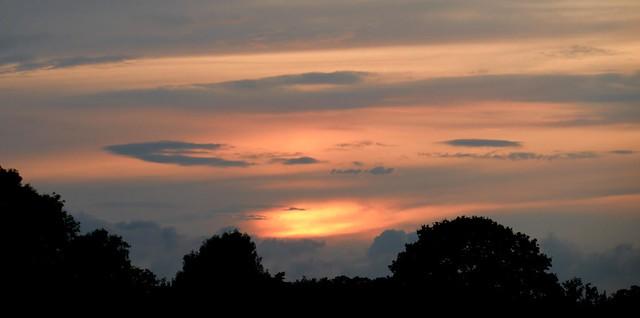 Bush Silhouette Sunset