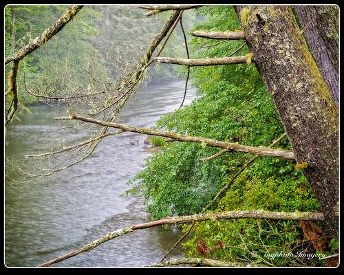trees green nature water river outdoors unitedstates scenic northcarolina vegetation dupontstateforest augphotoimagery