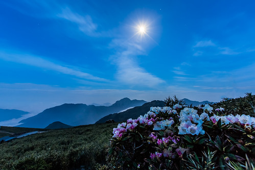 longexposure sunset moon color misty night canon nationalpark spring cloudy taiwan 南投 夕陽 bluehour 風景 afterglow 春天 nantou 太魯閣國家公園 1635mm 雲霧 mainpeak 玉山杜鵑 合歡山主峰 霞光 mthehuan rhododendronpseudochrysanthumhayata 5dmarkiii taiwanalpinerhododendron