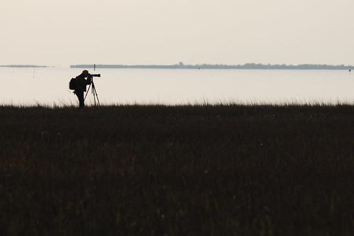 galveston silhouette texas birdphotographer galvestonislandstatepark mygearandme mygearandmepremium mygearandmebronze
