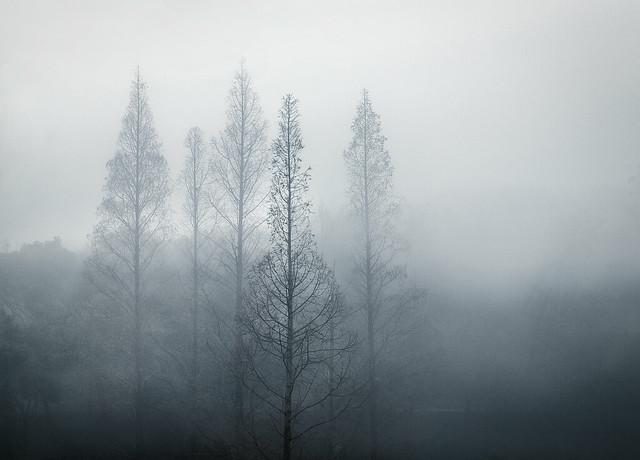 Fog in WHU