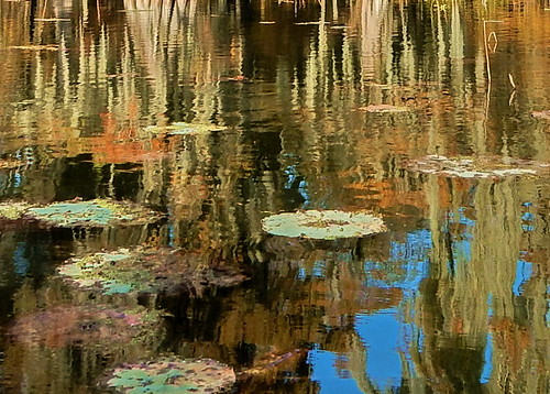 reflections louisiana bayou lilypads lakestmartin