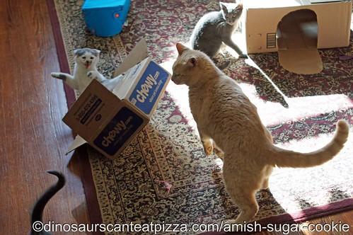 DCEP-Amish Sugar Cookies12   by RobynAnderson