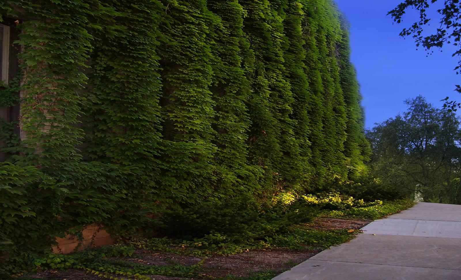 Muros Vegetales