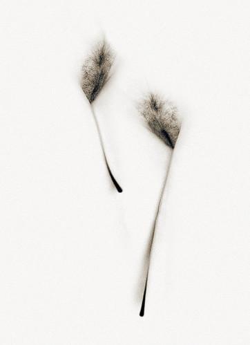 Tail Quills | by Richard George Davis
