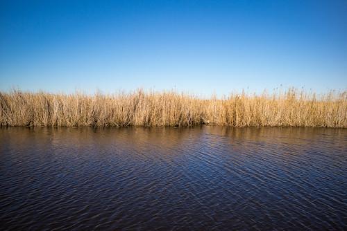river landscape louisiana unitedstates bayou wetlands kaplan