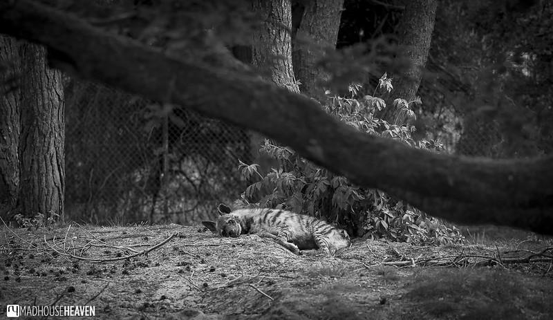 Safaripark Beekse Bergen - 0219