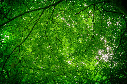wood green canon eos 350d canopy leafs branches