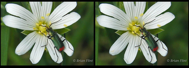 Beetle on white flower - 3d crossview