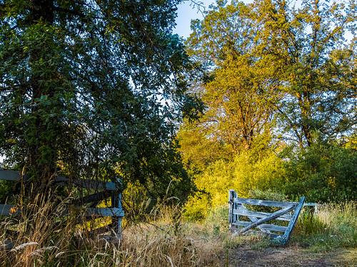 california morning trees sunrise gate unitedstates highdynamicrange grassvalley sdosremedios size4x5 ©stevendosremedios polarisroad