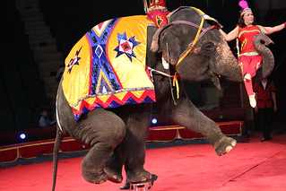 Elephant performance, Hanoi Circus 2012 | by Animals Asia