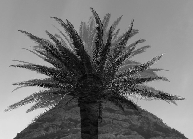 PalmPalm