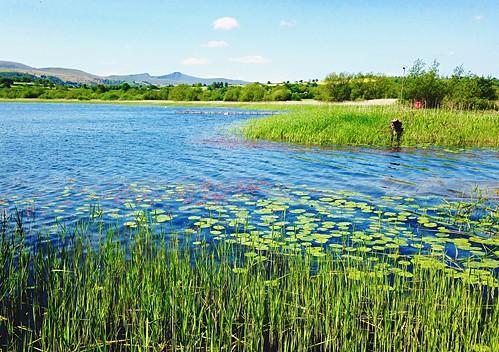 lake wales iceage rural reeds landscape cymru waterlillies penyfan llangorselake breconbeaconsnationalpark