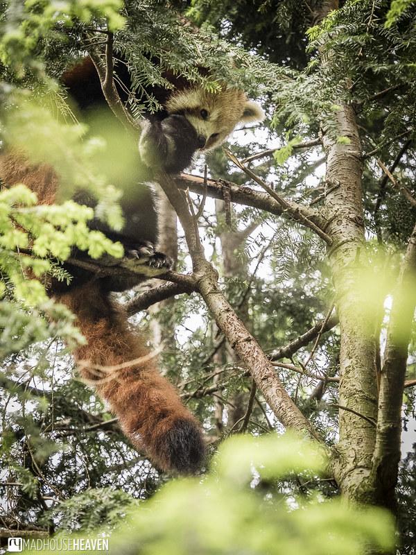 Safaripark Beekse Bergen - 0375