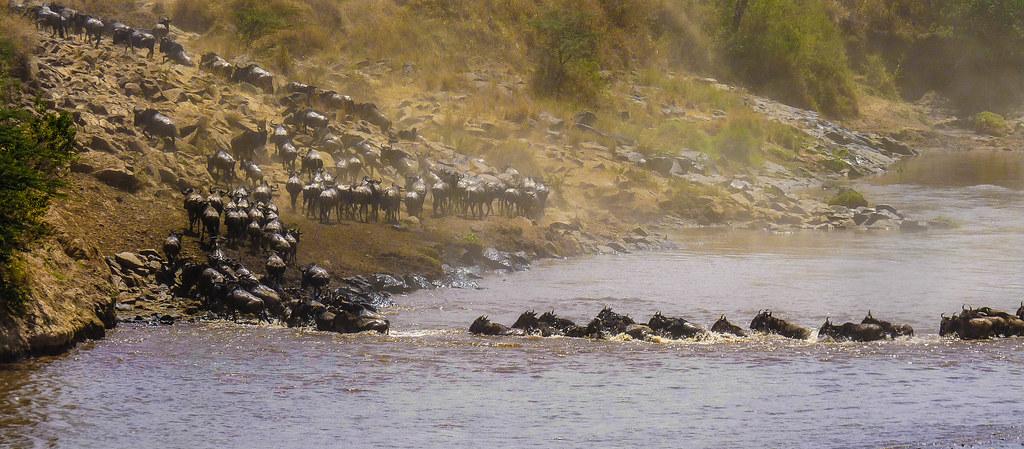 The Great Migration - Masai Mara, Kenya