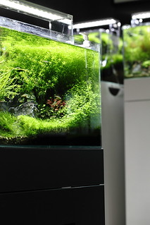 Green Aqua Showroom | by viktorlantos