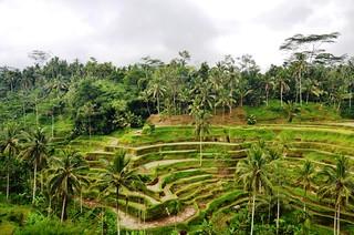 Bali.Rizières en terrasses.08 | by Antoine 49