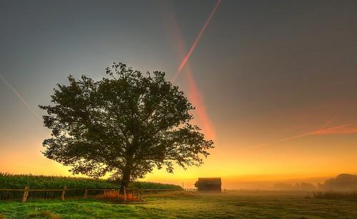 morning autumn light mist tree fog sunrise fence germany deutschland licht day nebel pentax herbst matthias zaun sonnenaufgang morgen baum hdr k5 niedersachsen lowersaxony körner sigma1020 winsenluhe mattkoerner1 grevelau