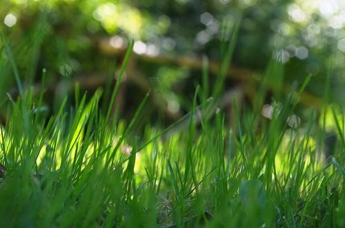 pentax k5 garden bokeh fence greens grass light focus depth september italy stefanorugolo