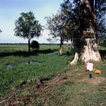 1983-7-31 srilanka arugambay-lahugala-kitulana-national-park