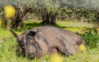 A dormir jamones!!!! | by Jose Losada Foto