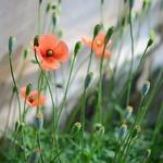 道端 Wayside flowers