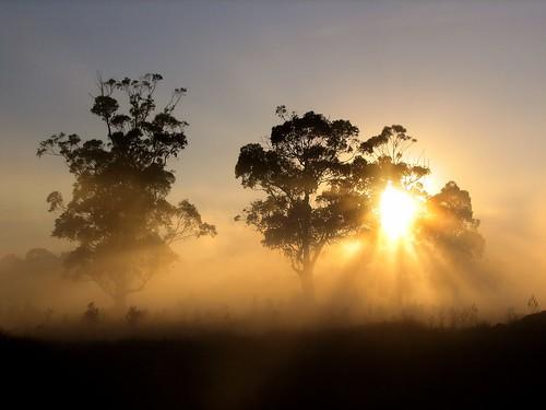 autumn light sun cold weather silhouette fog sunrise canon foggy australia victoria vic rays canonpowershots2is sunbeams canonpowershot gippsland warragul auspctagged hazelcreek pc3820 phunnyfotos